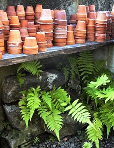 i love pots of all shapes, sizes, textures, colors. (although the larger the better)