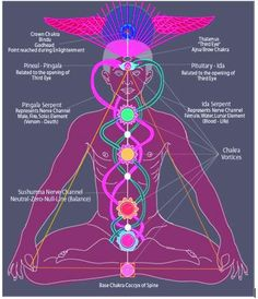 This diagram shows the chakras within the body, the Temple, The Pyramid with the Kundalini Serpent flowing down and up in a figure eight. This represents the vertical ascension to the third eye in our brain part of the