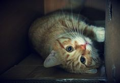 Cat in the box by Krinna.deviantart.com on @deviantART