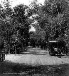 A country road and tramway near San Roque and Cavite, Luzon Island, Philippines, 1899 Railroad Companies, Manila, Philippines, Spanish, Nostalgia, Country Roads, Tours, San, Book Illustrations