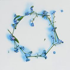 forget me not tattoo | And then on the other ankle me and my sister are getting matching ...