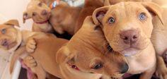 Animal Shelter #Fundraising Ideas