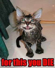 Funny-Cat-Pictures-animal-humor.jpg https://www.youtube.com/user/Styleism4