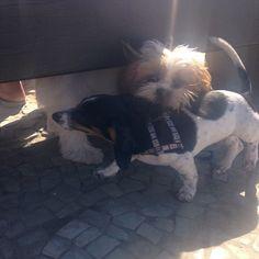 Brincando com meu novo amigo! #shihtzu #dog #cachorro #rio450 #riodejaneiro #anacomsorte #blog #blogueira www.anacomsorte.wordpress.com