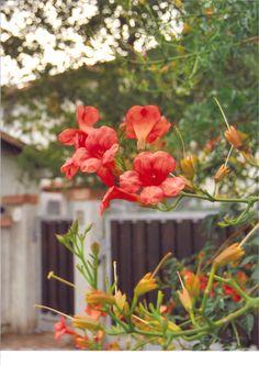dalla grata di un citofono mezzo nascosto da una lussureggiante tuberosa in fiore qualcuno gracchia qualcosa