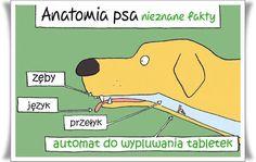 Jak wychować szczęśliwego psa: Znalezione w Internecie:)
