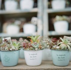 succulents in tin cups