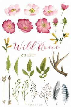Wild Roses 24 Watercolor Elements, hand painted clipart, floral wedding invite, greeting card, diy c Rose Illustration, Floral Illustrations, Art Floral, Watercolor Flowers, Watercolor Art, Watercolor Wedding, Wildrose Tattoo, Flower Drawing Tutorials, Watercolor Projects