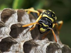 Keep wasps from building nests by misting WD-40 under eaves of your house.