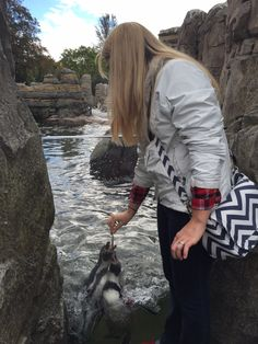 Debbie feeding Penguins at the Seattle Zoo