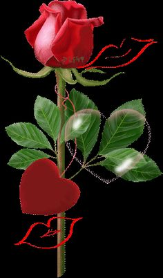 A Rose 4 u my dar Kiss Images, Kiss Pictures, Love Images, Free Pictures, Flowers Gif, All Flowers, Roses Gif, Hearts And Roses, Red Roses