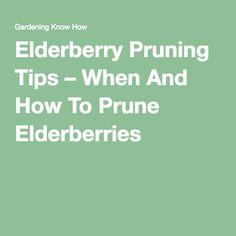Elderberry Pruning Tips – When And How To Prune Elderberries