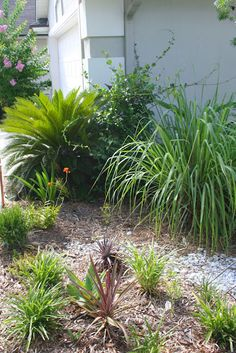 HOW TO PLANT A LUSH DROUGHT TOLERANT GARDEN
