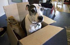 ¿Te vas a mudar? 5 tips para que tu perro se adapte a su nuevo hogar