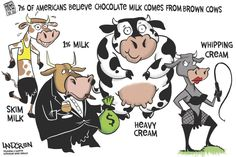 #DonLandgren cartoon on the news that 7% of Americans think #chocolatemilk comes from brown cows. #editorialcartoon