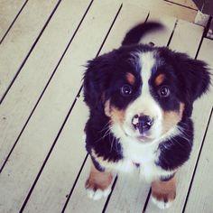 #puppy :)