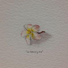 watercolour frangipani - Google Search