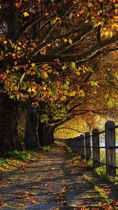 Autumn path - Slovakia  (by Wael Massalkhi)