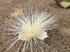 Květ ze stromu