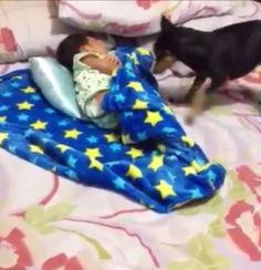 Él es muy protector #Dogs