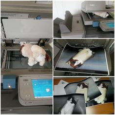 Grumpy LDLC se fait dresser le portrait à la photocopieuse
