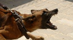 Hounds of Hell Aren't Family Pets: A Prophetic Dream About Radical Freedom — Charisma Magazine
