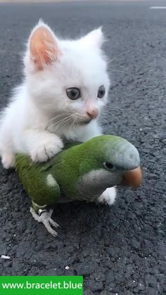 Funny Cute Cats, Cute Baby Cats, Cute Little Animals, Cute Funny Animals, Kittens Cutest, Cats And Kittens, Cute Animal Videos, Funny Animal Pictures, Unlikely Animal Friends
