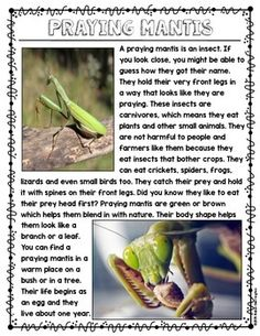 First grade and kindergarten close reading on an interesting insect called a praying mantis. Short and sweet ….supports ELA Common Core! Text dependent questions in worksheet form or flip book, you choose! $