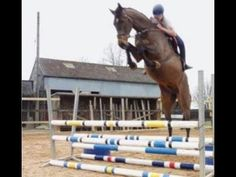 ARE U CRAZY - Horse fails/falls/fun - YouTube