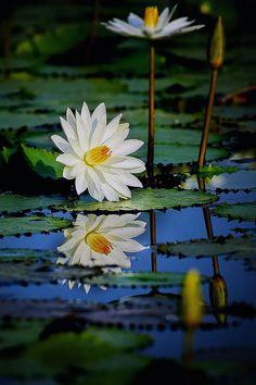 Morning Reflection --  by Setyawan B. Prasodjo