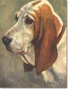 F.T. Daws - basset-hound