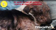 """Cane anziano viene abbandonato dalla sua famiglia in un canile che pratica l'eutanasia, perché: """"è diventato troppo brutto"""". Ecco la rivincita di Nik Nak"""