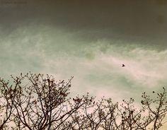 Seasons by Ashwin Deshpande, via Flickr