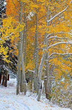 / Autumn - Fall or Winter? Autumn or winter? / Autumn - Fall or Winter? Winter Snow, Winter Time, Autumn Scenery, Walk In The Woods, Mellow Yellow, Winter Garden, Winter Scenes, Beautiful World, Beautiful Places