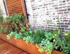 This is a small terrace garden we did for Terry Richardson's lower Manhattan rooftop terrace recently. It's all low-maintenance, perennial plants that will get bigger and more beautiful every year. What a fun job for us! We LOVE his renovated firehouse, and now it's got its very own organic, sustainable greenery on top!