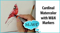 Painting a Cardinal in Watercolor with Winsor Newton Markers