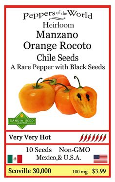 Manzano or Orange Rocoto originates in South America and grows on the Andean mountain slopes. It is among the oldest of domesticated chiles being cultivated for thousands of years. Get GMO-free hot pepper seeds at: http://www.sandiaseed.com/collections/hot-pepper-seeds/products/manzano-orange-rocoto