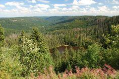 》Auch der Ausblick über den Schwarzwald ist wunderschön. Der jüngste Nationalpark Deutschlands wurde erst 2014 gegründet.《