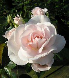 -- www.primrose.co.uk