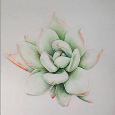 Succulent Sketch
