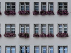 Building face texture with windows and flower pots. This texture is seamless and comes with a Photoshop pattern file. The texture is free to Flower Pots, Flowers, Building Facade, Photoshop, Windows, Texture, Architecture, Photography, Container Plants