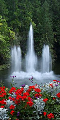 Science Discover Fountains of water and red flowers Beautiful Nature Pictures Beautiful Nature Wallpaper Amazing Nature Nature Photos Beautiful Landscapes Beautiful Gardens Nature Artwork Nature Nature Nature Images Beautiful Landscape Wallpaper, Beautiful Flowers Wallpapers, Scenery Wallpaper, Beautiful Roses, Beautiful Landscapes, Beautiful Gardens, Beautiful Photos Of Nature, Amazing Nature, Nature Photos