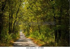 Image result for young oak woodland