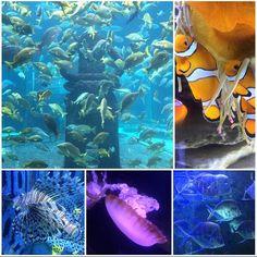 Beautiful fish and underwater creatures at Atlantis Resort in The Bahamas.