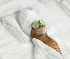 Spa day for Mrs Cat complete with an essential oil massage and cucumber eye treatment #catatthespa #spaday