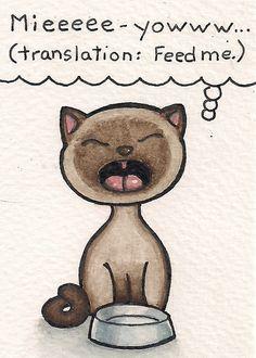 Cat Meow Translation