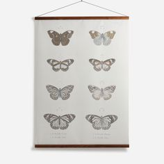 'Butterflies' Wall Chart - National #Maritime #Museum Collection | Shop Wall Charts & Wall Murals at surfaceview.co.uk
