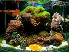 aquascaping a soft coral nano reef - Google Search