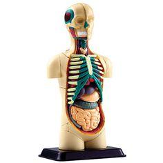 Juego para conocer el Cuerpo Humano en la tablet I-WOW ATLAS HUMAN BODY 3.0
