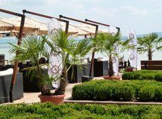 Voordelig van de zon genieten? Kom naar Vakantiehuis Balaton direct aan het #Balatonmeer in #Hongarije www.vakantiehuis-balaton.nl Plants, Plant, Planting, Planets